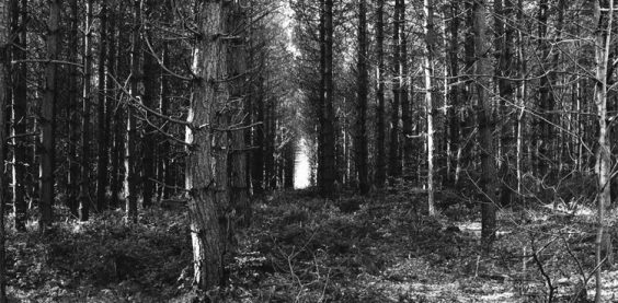 Trees, Chopwell Wood (#4157)