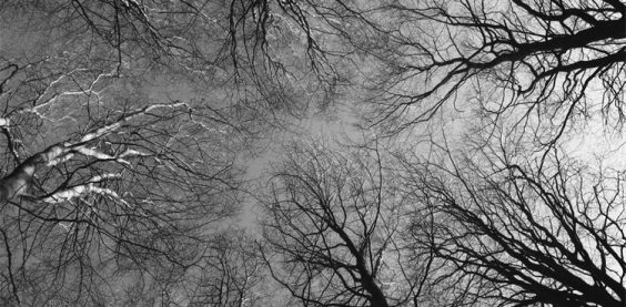 Trees, Chopwell Wood (#4203)